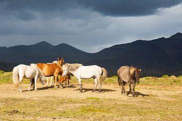 Isländer für schwarze Berge von Summer van Beek