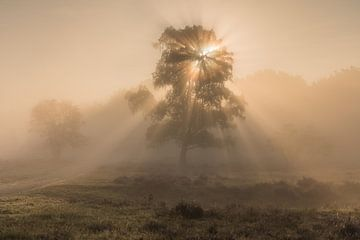 Brouillard au lever du soleil sur le Westerheide 4
