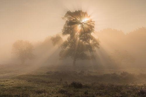 Mist rond de zonsopkomst op de Westerheide 4