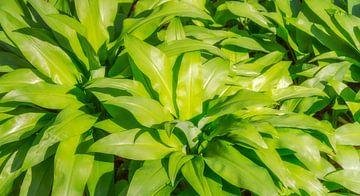 Zonnige wilde knoflook vegetatie van Achim Prill