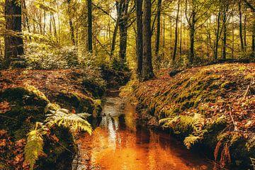 Autumnmood | Hof Espelo (4) van