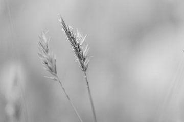 Stacheln im Wind schwarz und weiß von Hanneke Bantje