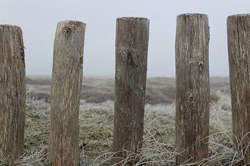 Paaltjes in Texelse duinen van Kevin Ruhe