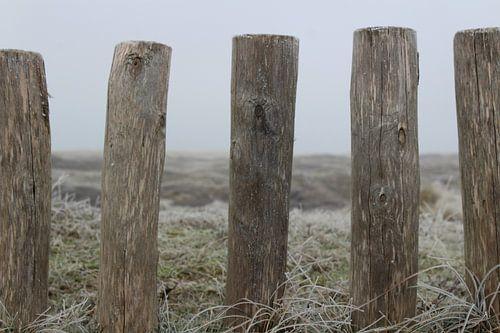 Paaltjes in Texelse duinen van