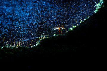 Kleine paddestoel in mysterieus bos met regen van Fotografiecor .nl