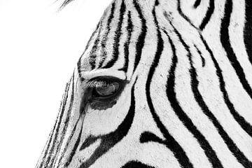 Zebra sw 1070700 von Barbara Fraatz
