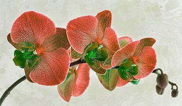 orchidee, oranje van Rietje Bulthuis