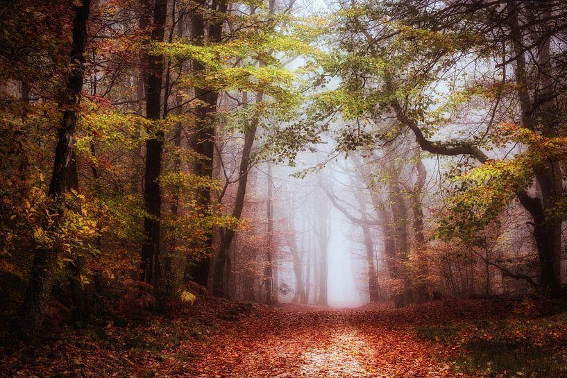 Begin november van Tvurk Photography