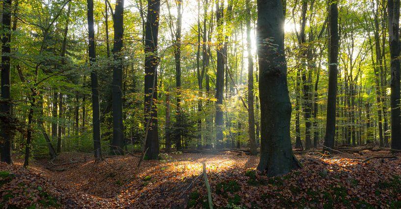 Zonnestraal in het bos van Chris van Kan