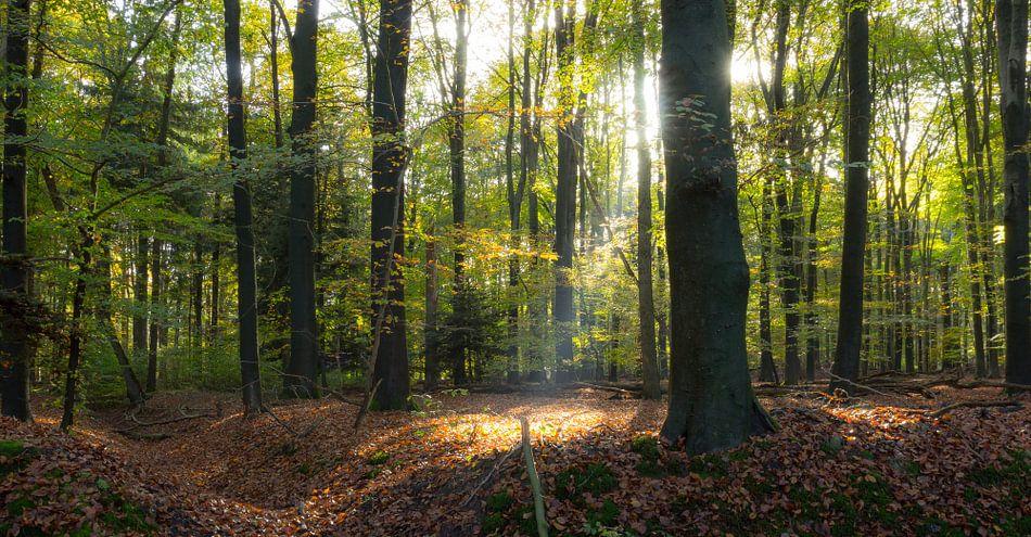 Zonnestraal in het bos