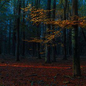 De rode draad van licht door het bos van Joris Pannemans
