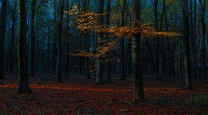 De rode draad van licht door het bos van