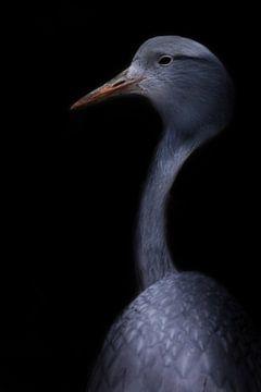 Kran anmutigen Vogel Nahaufnahme, dünnen langen Hals, schönen Kopf auf einem unscharfen Hintergrund  von Michael Semenov