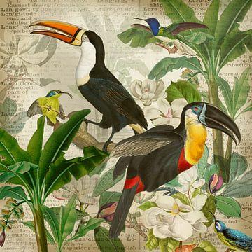 Au royaume du toucan et du colibri sur christine b-b müller