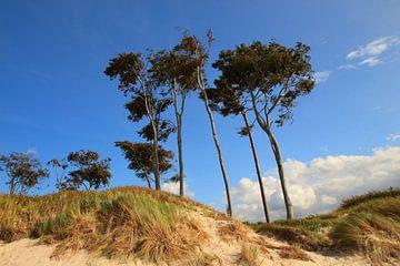 Am Weststrand von Prerow von Ostsee Bilder