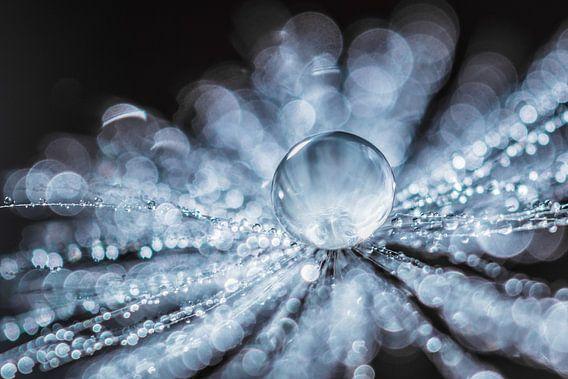 Paardenbloempluis met waterdruppeltjes van Bert Nijholt