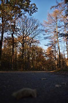 Op weg naar... Herfst! von DoDiLa Foto's