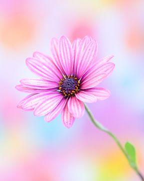 Pretty in Pink! van Karin de Bruin