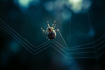 De spin Sebastiaan van Fardo Dopstra