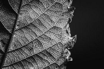 Herfstblad in zwart/wit van Marjolijn Maljaars