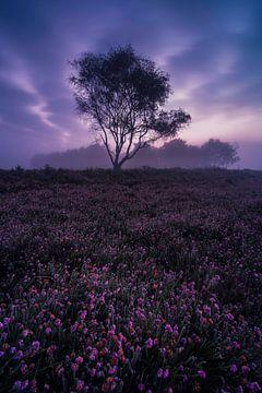 Violette Felder Buurserzand von Sander Grefte