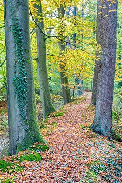 Landschap met bomen in Europees bos tijdens herfst van Ben Schonewille