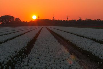 Sonnenuntergang Goeree Overflakkee von AdV Photography