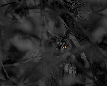 Das Auge von Andrew George
