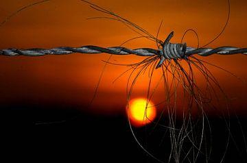 Hair at sunset van Cor de Keijzer