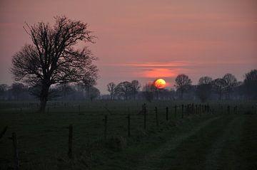 Sonnenuntergang mit Baum von Pauline Bergsma