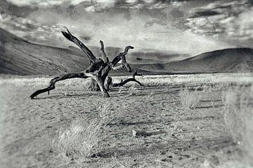 Totholz in der Namib-Wüste Namibia 2 von Jan van Reij