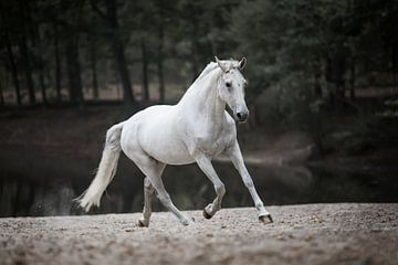 Weißes Pferd in Aktion von Lotte van Alderen