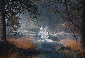 Frost auf der Brücke im Herbst von Rob Visser