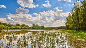 Großes Wasserspiel im Naturschutzgebiet Horsterwold von Jenco van Zalk