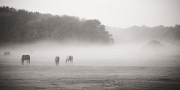 Pferde im Nebel von Peter Branger