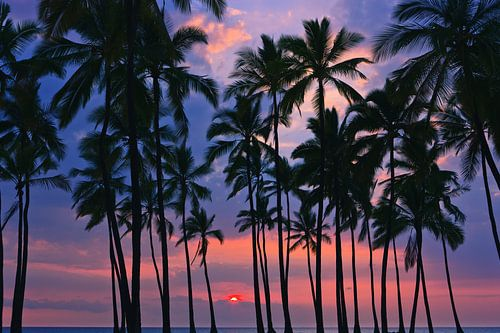 Palms at Sunset at Pu'uhonua o Hōnaunau, Hawaii van Henk Meijer Photography