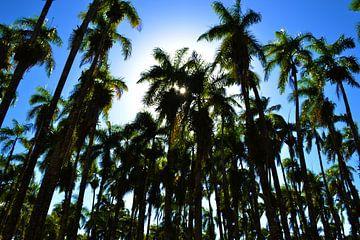 Palmbomen van Krishan Jhoeri