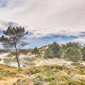 landschap van de Schoorlse duinen van eric van der eijk