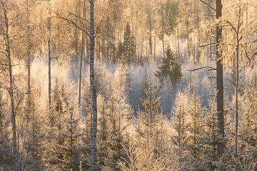 Ontwaken in het bos na de eerste koude nacht met wat vorst. van Mindy Molein