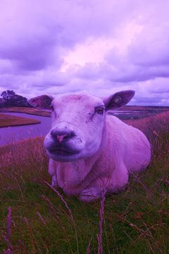 schaap, the sheep, der hammel,  van Yvonne de Waal Malefijt