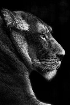 portret van een leeuwin, zwart wit sur Heino Minnema