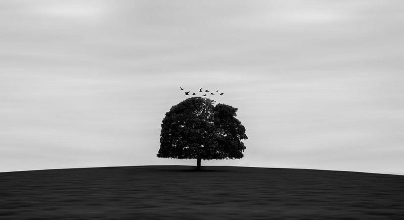 Magic Tree van Eduardo