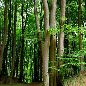 Dans le Maiwald sur Ostsee Bilder