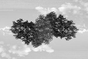 Gespiegelde bomen (2)
