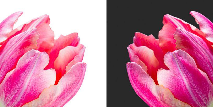 Diptychon von Tulpen von Judith Spanbroek-van den Broek