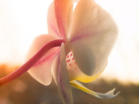 Macro Photography Orchid