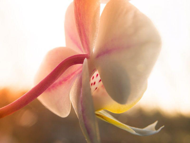 Macro Fotografie Orchidee van Art  By Dominic