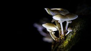 De sporen van de paddenstoel wachten op een nieuw briesje van Studio de Waay