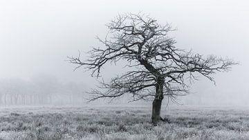 Cold tree sur Arjen Dijk