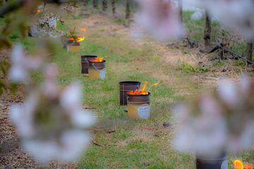 Vuurpot tussen de kersenbomen von Moetwil en van Dijk - Fotografie